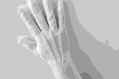 White-long-wrist-cotton-gloves